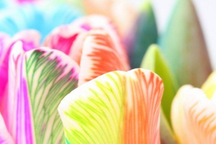 fleurs-colores-05