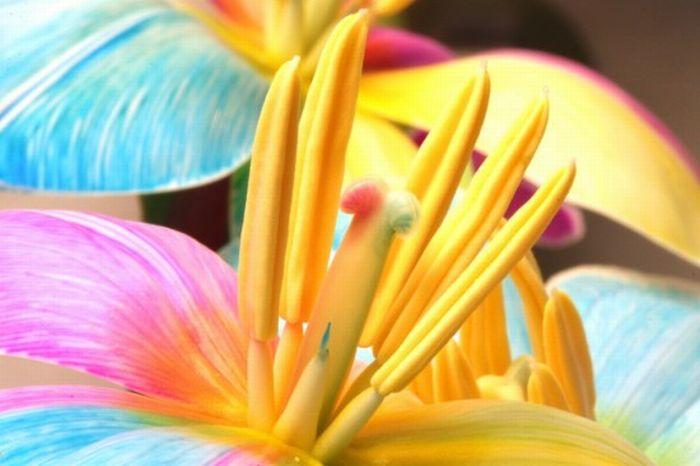 fleurs-colores-06