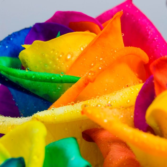 fleurs-colores-08