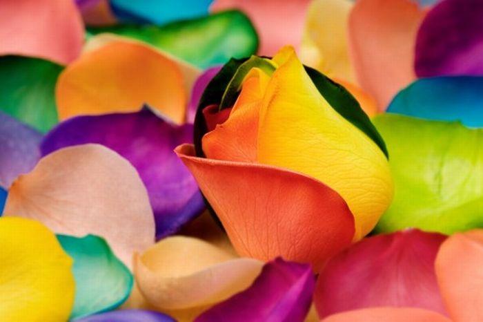 fleurs-colores-10