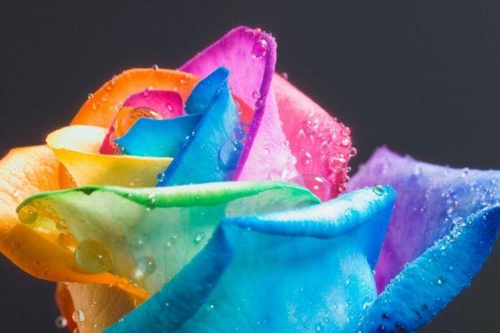fleurs-colores-12