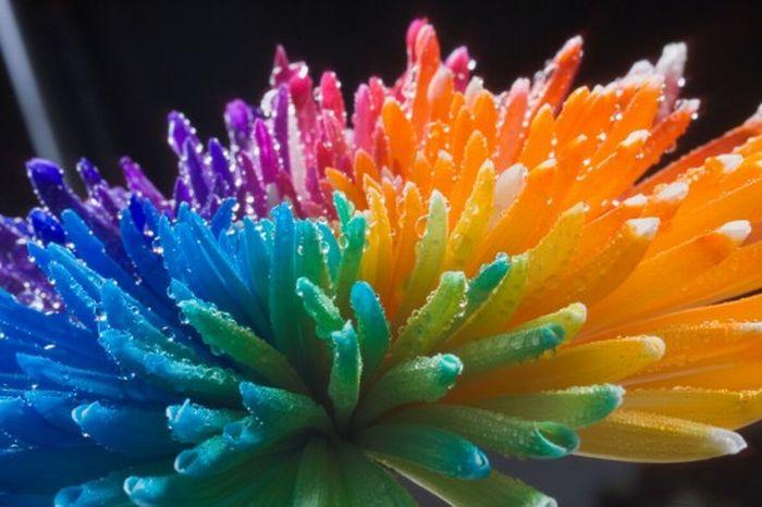 fleurs-colores-13