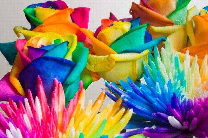 fleurs-colores-15