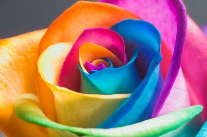 fleurs-colores-18