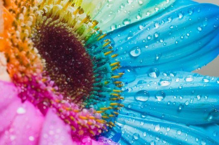 fleurs-colores-19