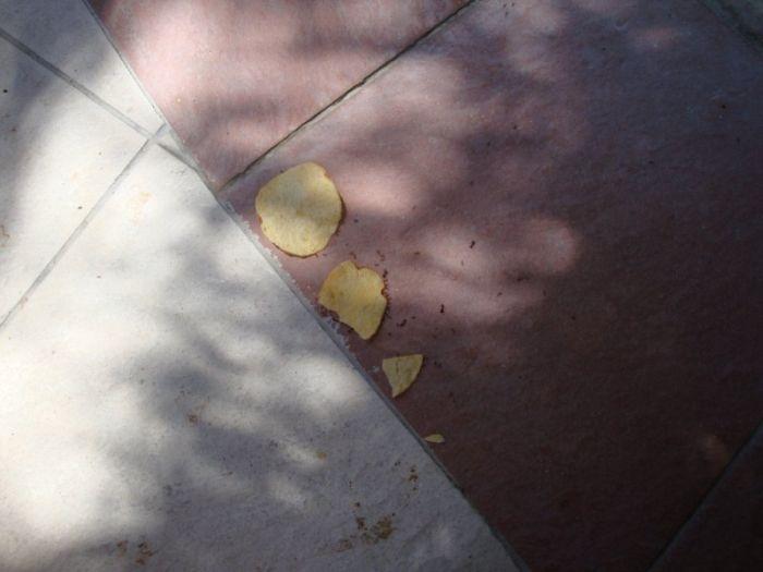 fourmis-chips-travail-equipe-03