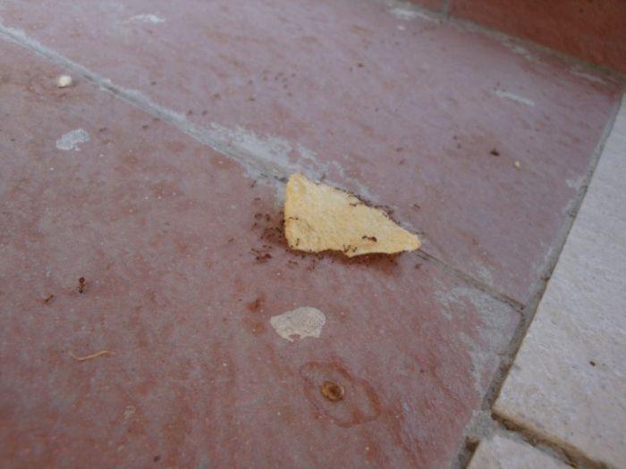 fourmis-chips-travail-equipe-10