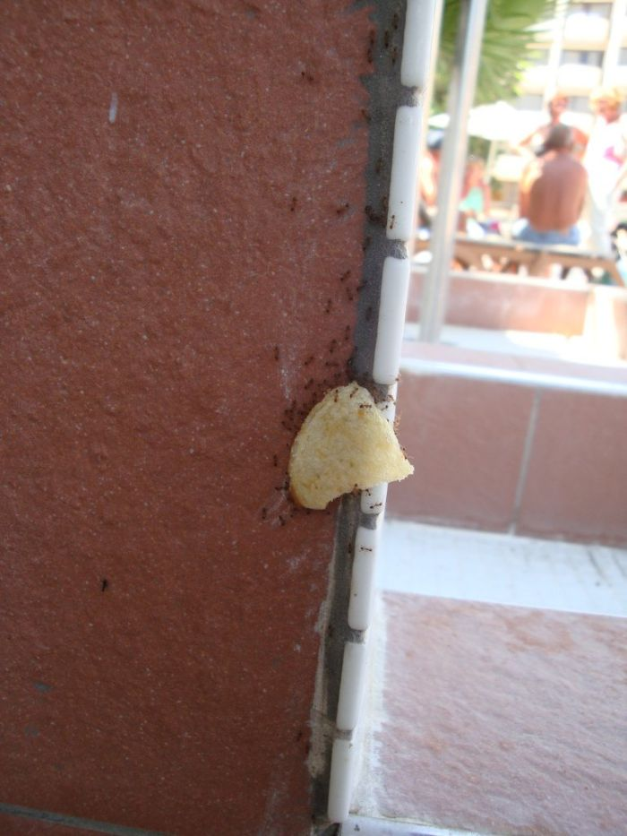 fourmis-chips-travail-equipe-20