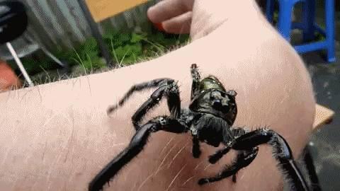 grosse-araignee-sur-bras