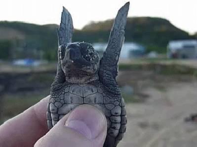 une-petite-tortue-qui-nage