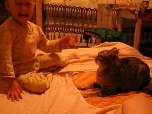 gif-chat-attaque-bebe