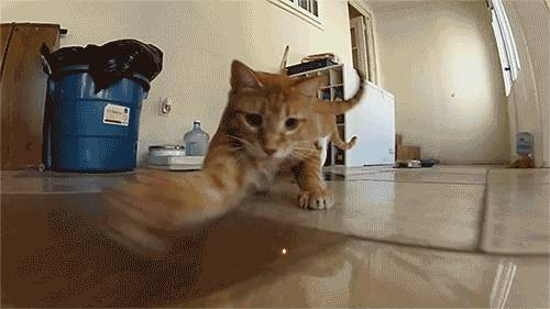 gif-chat-court-apres-laser