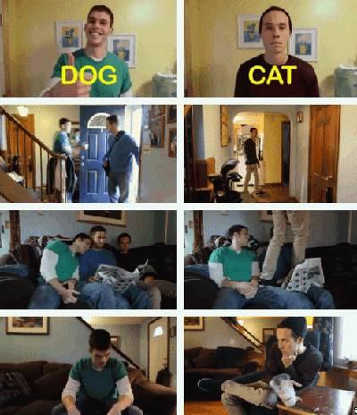 gif-chien-chat-humain