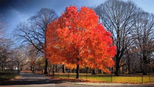 gif-arbre-qui-perd-ses-feuilles