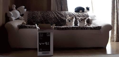 le-chat-cet-abruti