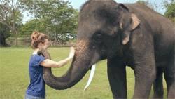 au-revoir-elephant
