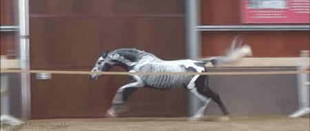 cheval-squelette-saut