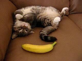 chat-peur-banane