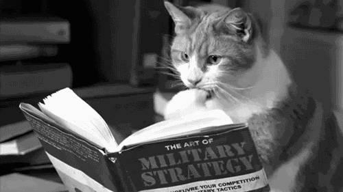 chat-feuillette-livre