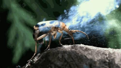 insecte-degage-fumee