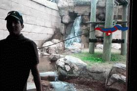 spiderman-zoo