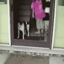 chien-qui-connait-pas-vitre