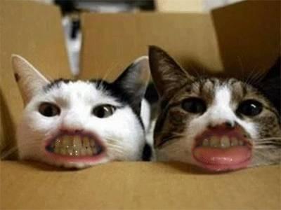 chat-bouches-humains