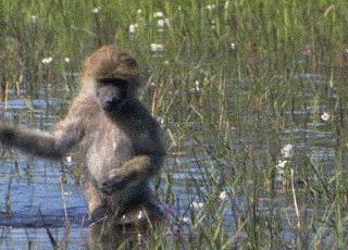 singe-eau-trop-froide