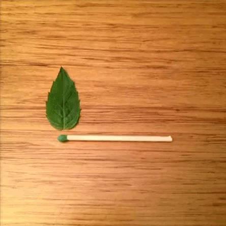 allumette-feu-vert