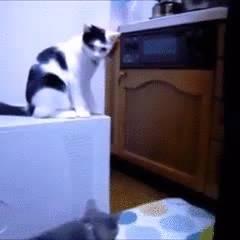 chat-peine-effleure-quil-senerve