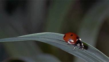 coccinelle-accident-goutte-eau