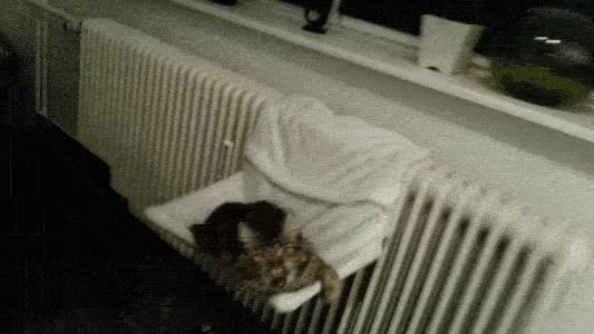 chaque-fois-que-mon-chat-baille