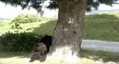 chien-court-indefinement-derriere-ecureuil
