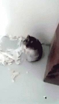 hamster-wasted
