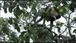 singe-fait-une-enorme-bombe