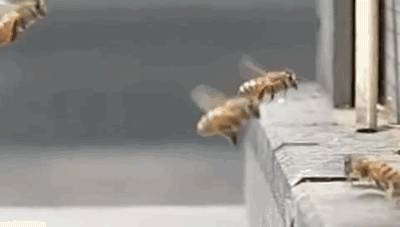accident-entre-2-abeilles