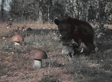 ours-qui-vole-champignon