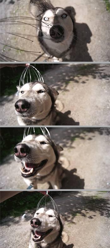 chien-massage-crane