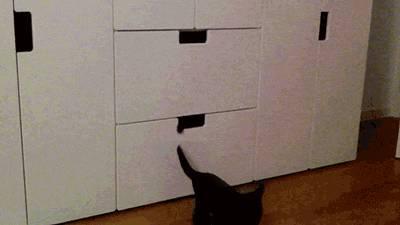 plein-chats-donner