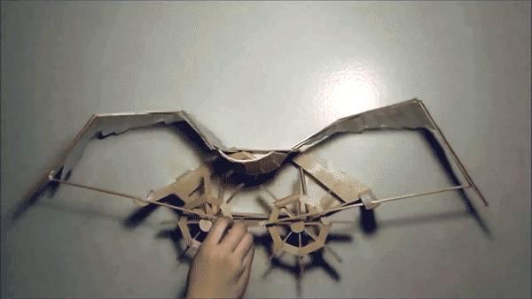 vol-oiseau-ailes-kinetique