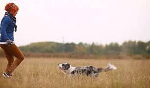 chien-salto-pied-maitre