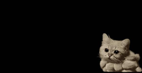 smoke-cat