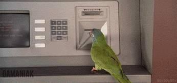 oiseau-utilise-distributeur-billets
