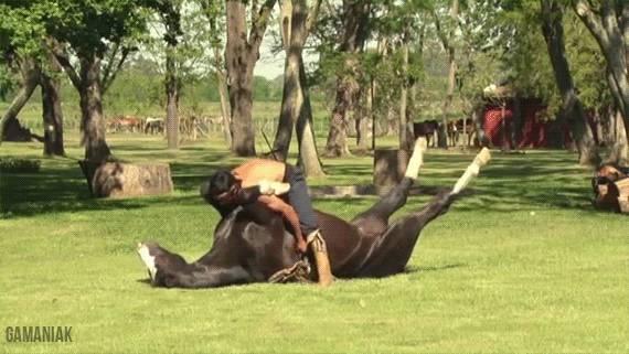 yoga-sur-cheval