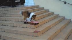 chien-skateboard-escaliers