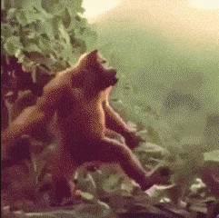 choregraphie-singe-fille