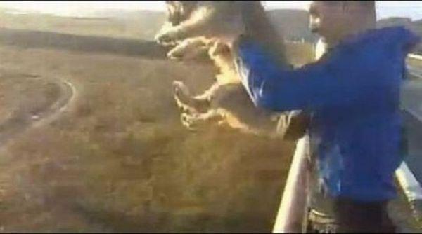idiot-pont-chien-prison-08