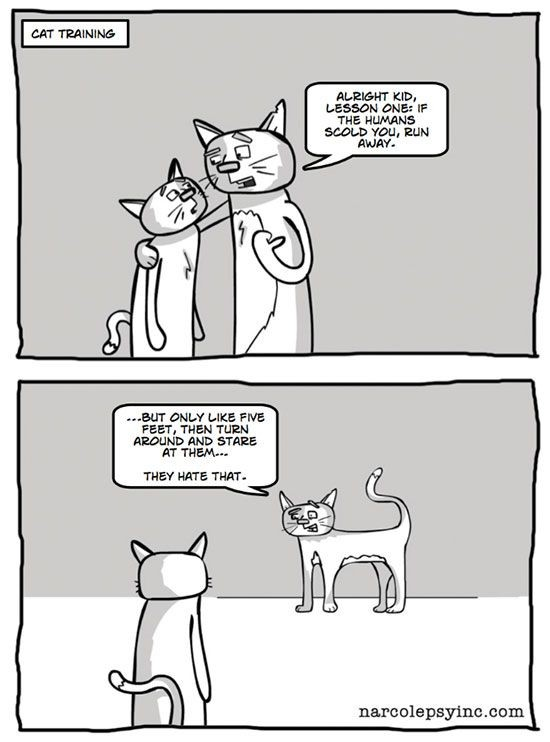 lutte-chat-comprendre-31