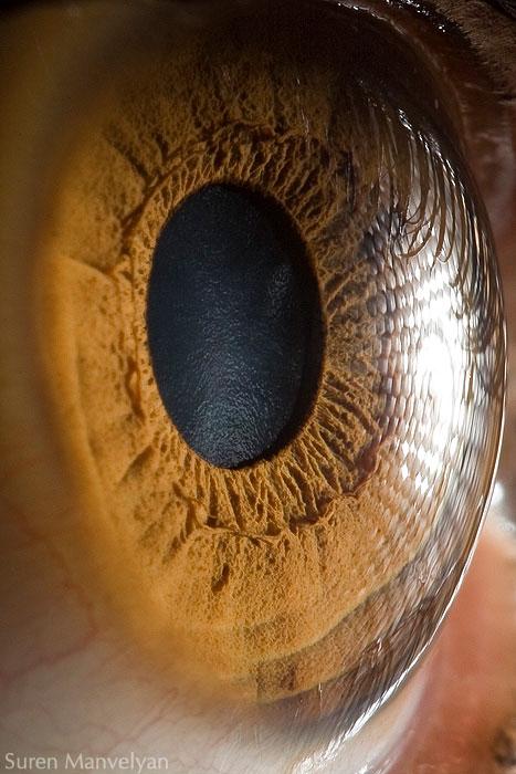oeil-humain-gros-plan-06