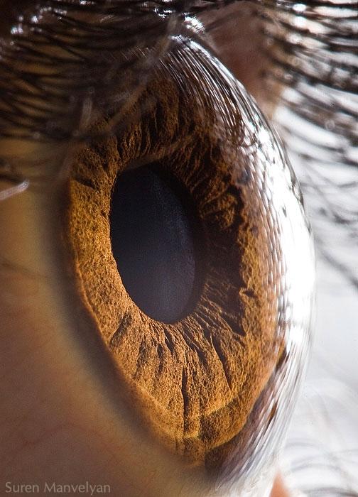 oeil-humain-gros-plan-10